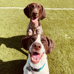 2_happy_pups2