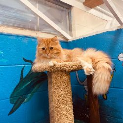 cat_elevated